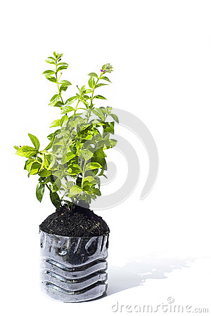 Small tree prepare in plastic with earth box for p Stock Photo