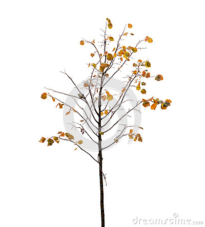Free Small Tree With Yellow Leaves And Bird On Branch In Autumn Seaso Stock Photos - 45896173