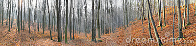 Small valley in autumn beech forest