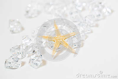 Starfish and White Gems