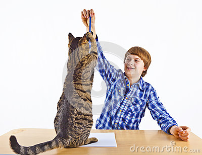 Smart boy learning for school plays with his cat
