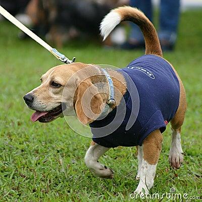 Free Smart Dog Stock Photo - 231140