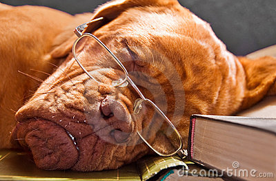 Smart Dog Sleeping in Books