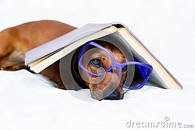 Smart looking dog