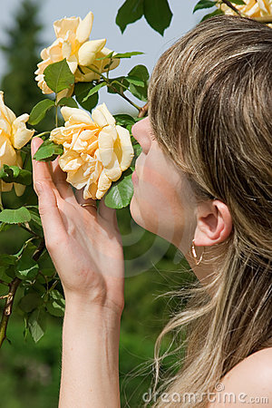 Free Smell Of Roses Royalty Free Stock Photo - 2519935