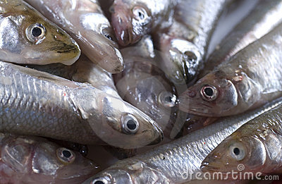 Smelt Stock Photos - Image: 8292683