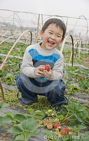 Smiling boy harvesting strawberries