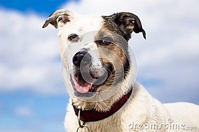 Smiling dog against sky