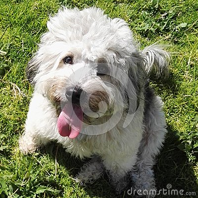 Free Smiling Dog With Grass Background Royalty Free Stock Photos - 117145938