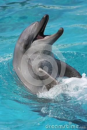 Smiling Dolphin portrait