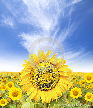 Smiling face of sunflower