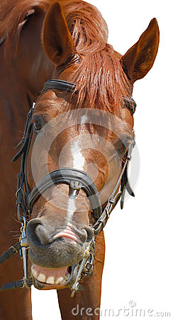 Free Smiling Horse Royalty Free Stock Images - 36016169