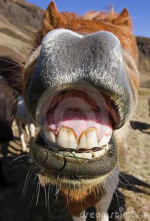 Smiling horse