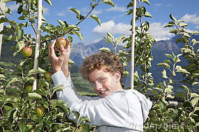 Smiling teenager picking an apple