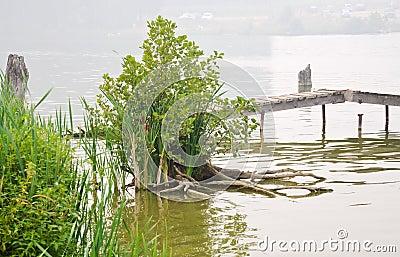 Smog under city pond in summer day