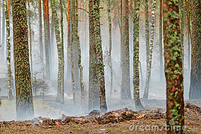 Smoke and fire in the wood