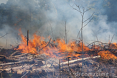 Smoke and flames during a prescribed fire burn
