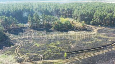 Smoke over forest, wild fire aerial view. Scorched earth and tree trunks after a spring fire in forest. Black burnt field. Extraordinary incident. Consequences stock footage