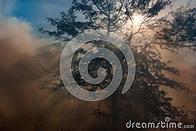 Smoke and Sun Rays