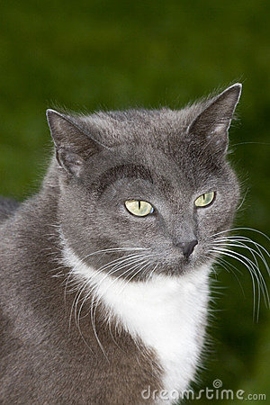 Smokey the cat