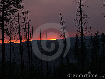 Smokey sunset with burnt pine trees silhouetted