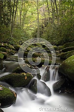 Smoky Mountain Flowing Stream