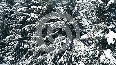Snö som faller på de grå träden i snöskog i bergen stock video