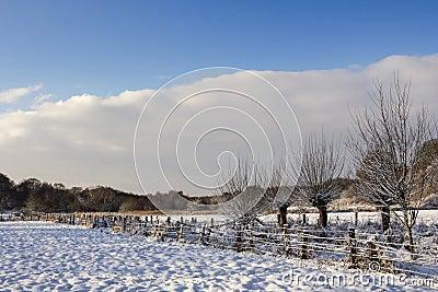 Snö täckte fält