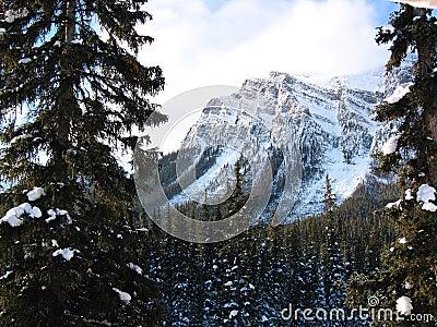 Snöig majestätiskt berg för skog