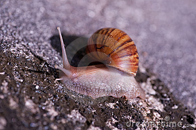 Snail Stock Photo - Image: 10240290