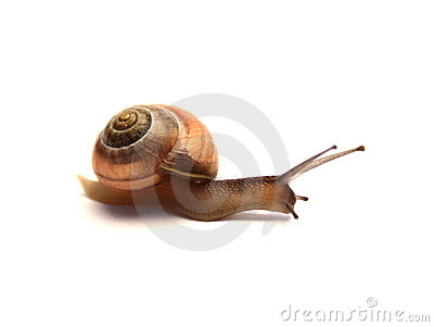 Snail Royalty Free Stock Images - Image: 3087449