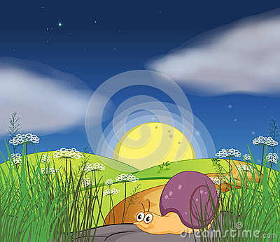 A snail along the road