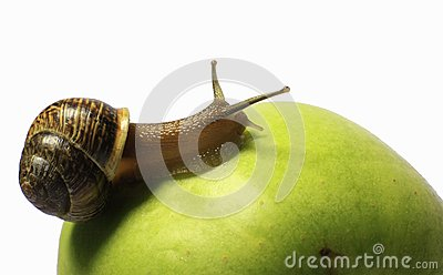 Snail on an apple