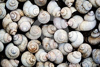 Snail background