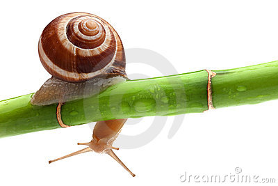 Snail with bamboo