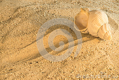 Snail at a beach
