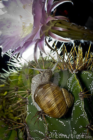 Snail on cactus