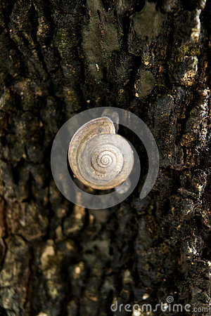 Snail is climbing