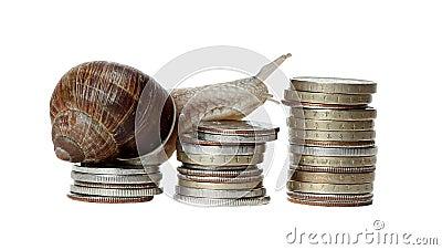 Snail climbing coins