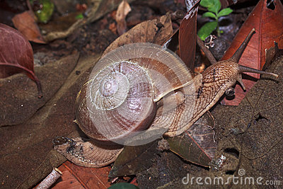 Snail is climbing up