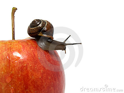 Snail creep on a red apple