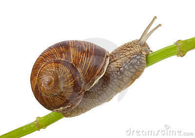 Snail creeping on stem