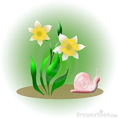 Snail and daffodil