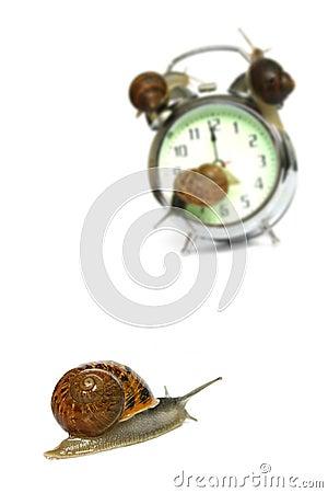Free Snail Deadline Stock Photos - 323083
