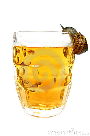 Free Snail Drinking Beer Stock Images - 325294