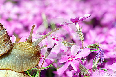 Snail and flowers.