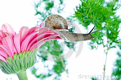 Snail and flowers