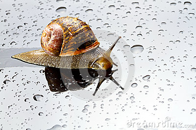 A snail on a glass surface