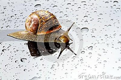 A snail on a glass surface