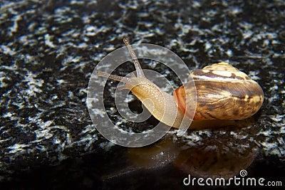 Snail on granite